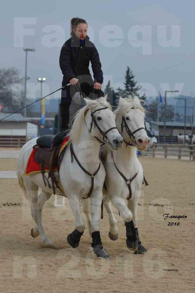 Cheval Passion 2016 - CAMARGUE poste hongroise - 1