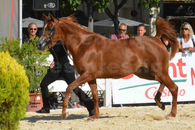 Concours national de Nîmes - MYSS SASKIA - Notre Sélection - 11