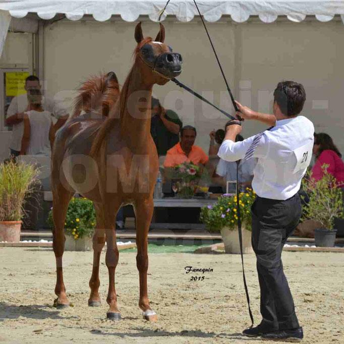 Championnat de FRANCE des chevaux ARABES à Pompadour - PEARL DE DJOON - Notre Sélection - 38