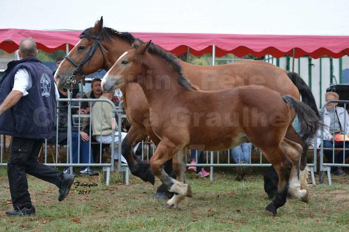 Fête du cheval à Graulhet le 17 septembre 2017 - chevaux de traits - 4