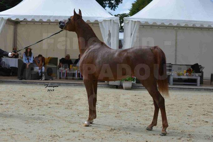 Championnat de FRANCE des chevaux ARABES à Pompadour - PEARL DE DJOON - Notre Sélection - 16