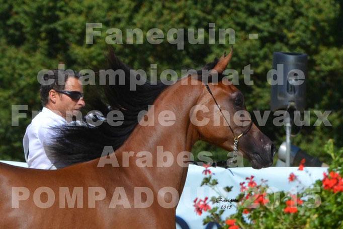 Championnat de FRANCE du cheval ARABE à POMPADOUR 2015 - Classes PROFESSIONNELS - PRIMERIUS EMER - Portraits - 1