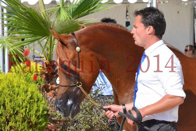 Concours National de Nîmes de chevaux ARABES 2014 - Notre Sélection - Portraits - PRIAM DE DJOON - 09