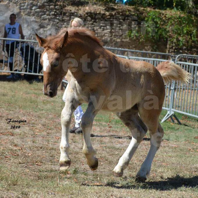 Fête du cheval à GRAULHET le 16 septembre 2018 - Concours Départemental de chevaux de traits - 54