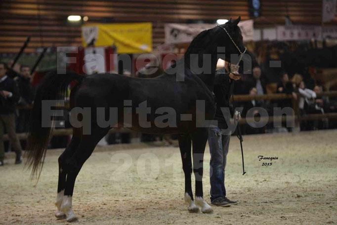 Salon Equita Lyon  2015 - YEL'S BLACK MAGIC - Notre Sélection - 1