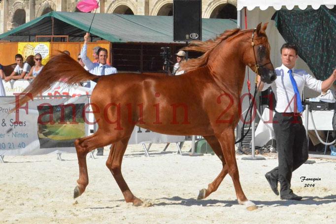 Concours National de Nîmes de chevaux ARABES 2014 - Notre Sélection - PRIAM DE DJOON - 05