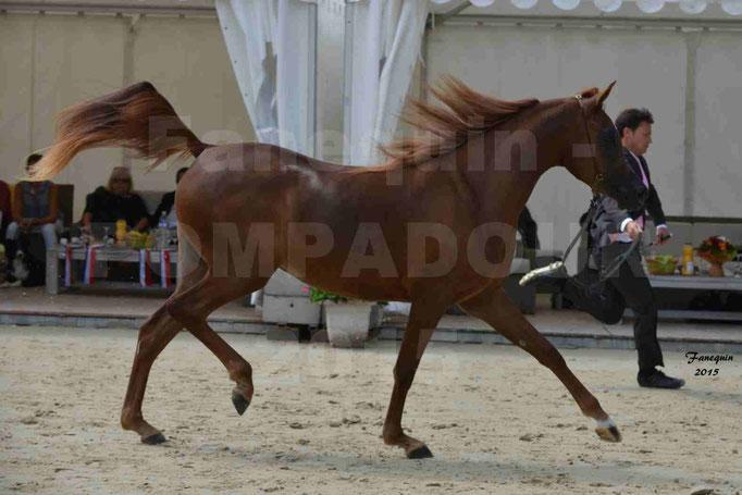 Championnat de FRANCE des chevaux ARABES à Pompadour - PEARL DE DJOON - Notre Sélection - 11