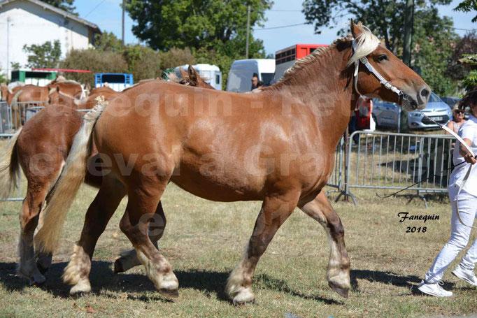 Fête du cheval à GRAULHET le 16 septembre 2018 - Concours Départemental de chevaux de traits - 36