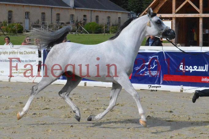 CHAMPIONNAT DE FRANCE  2014 A POMPADOUR - Notre Sélection - NADJIK DES AUBUES - 01