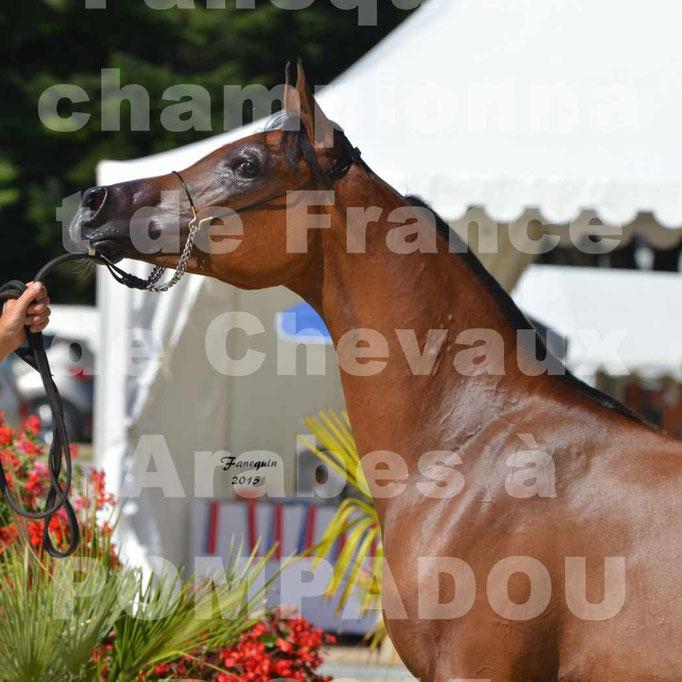 Championnat de FRANCE du cheval ARABE à POMPADOUR 2015 - Classes PROFESSIONNELS - PRIMERIUS EMER - Portraits - 5