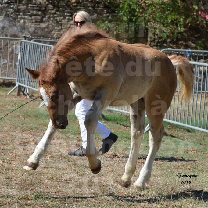 Fête du cheval à GRAULHET le 16 septembre 2018 - Concours Départemental de chevaux de traits - 53