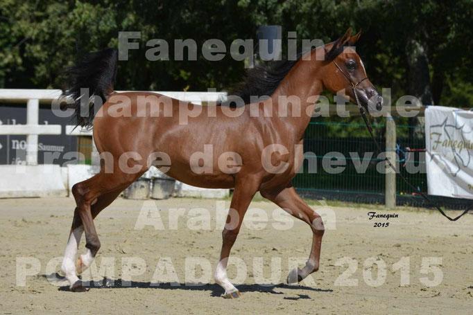 Championnat de FRANCE du cheval ARABE à POMPADOUR 2015 - Classes PROFESSIONNELS - PRIMERIUS EMER - 04