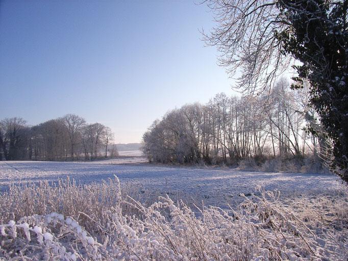Winterliche Natur auf der Büttendorfer Heide