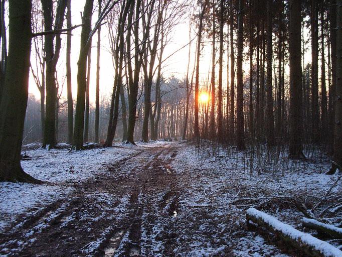 Sonnenaufgang in der Buchwiese