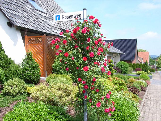 Rosenweg