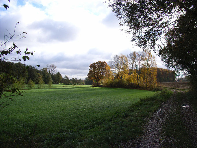 Herbst am Benkhöfener Bruch