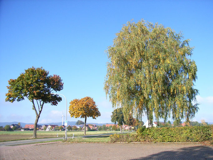 Am Büttendorfer Maschweg