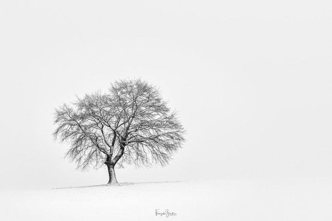 139_Winterbaum