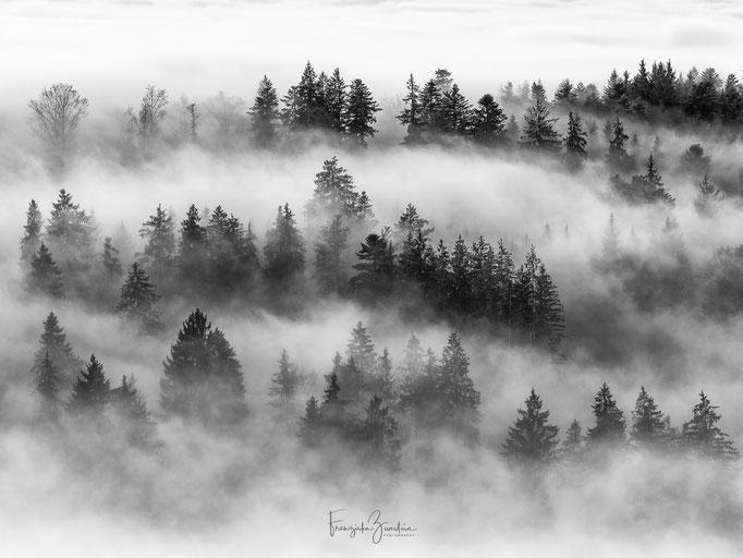 503_Nebelschwaden