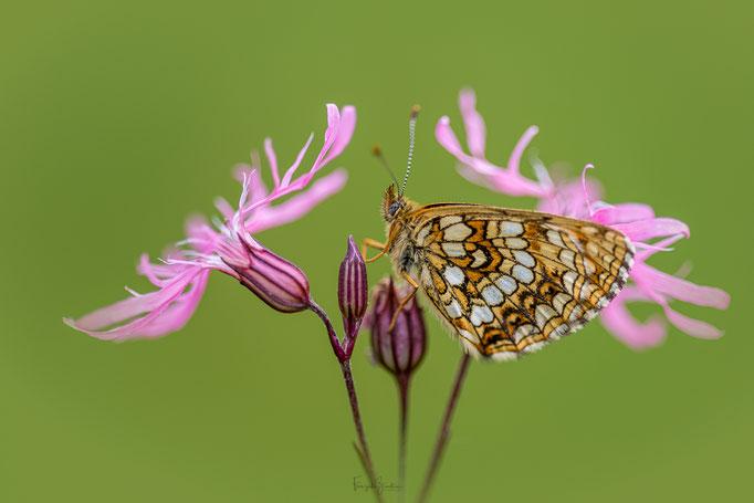 317_Schmetterling