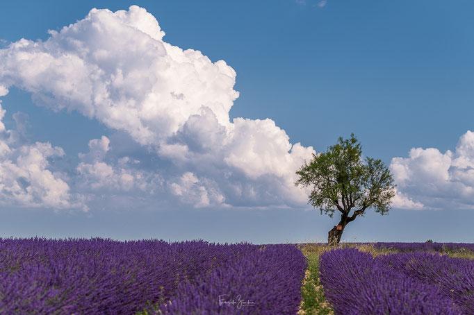 148_Provence
