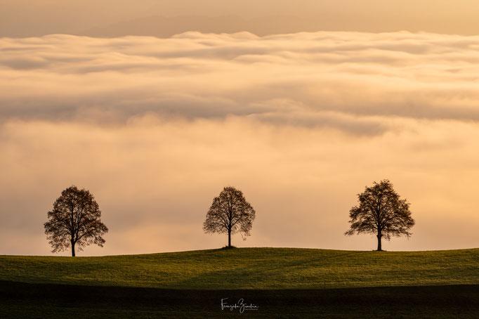 153_Drei Bäume