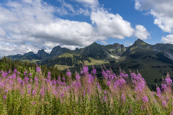 Blumenpracht Gantrisch Naturpark