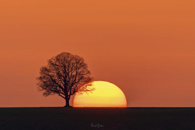 125_Sonnenbaum
