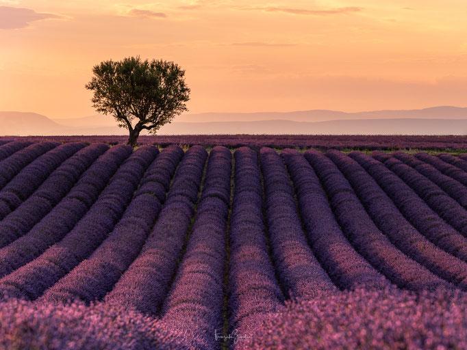 149_Provence