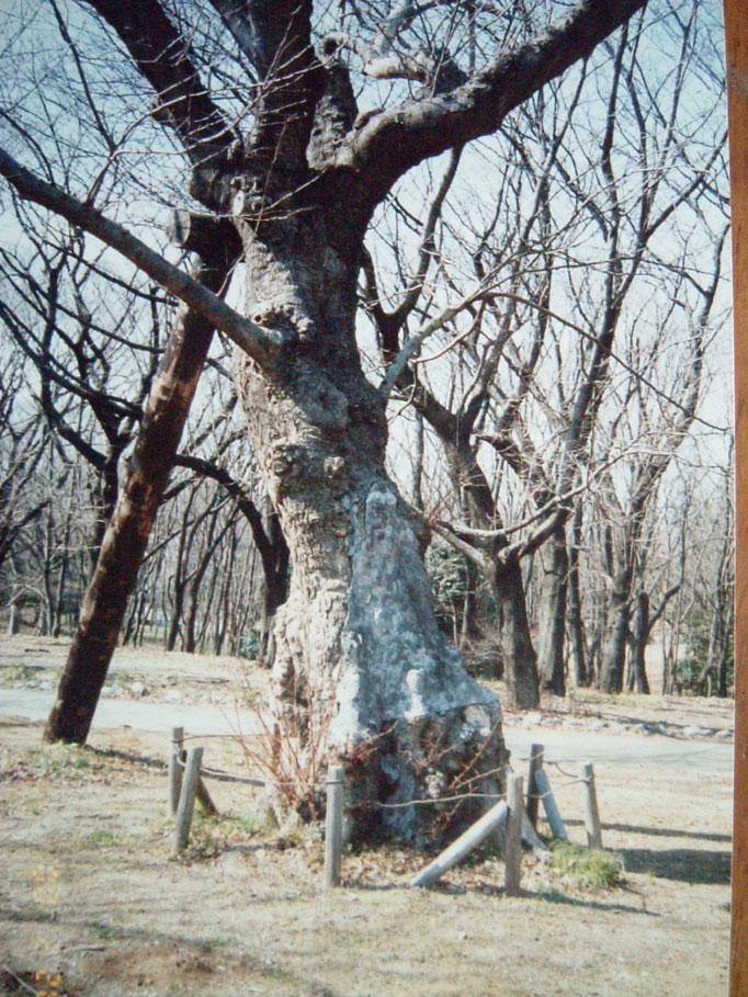 2000年1月治療前。モルタルが塗布されている状態。