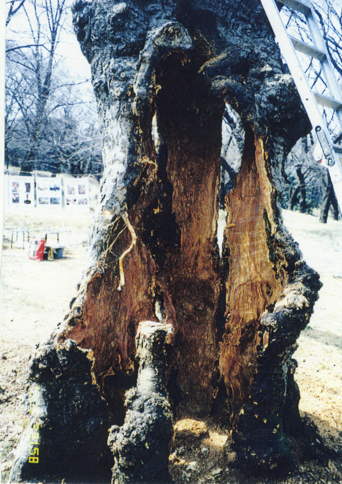 2000年1月。モルタル及び不朽部の除去後。