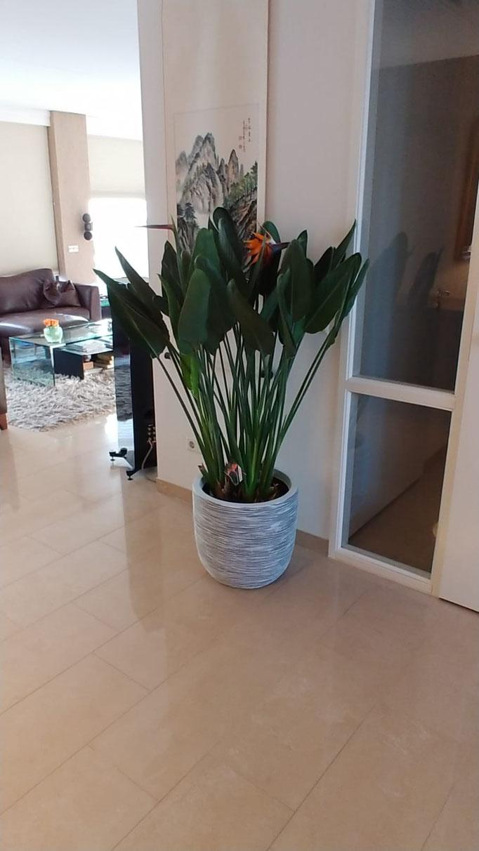 medium : 5 a 10 planten per pot
