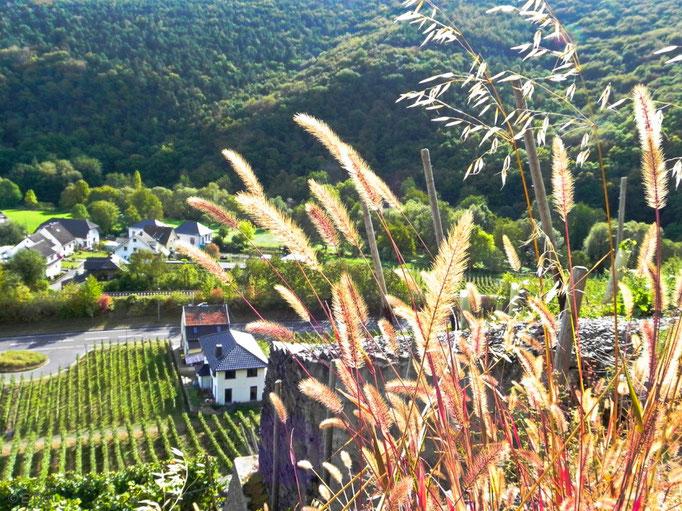 Blick aus der Steillage bei Walporzheim