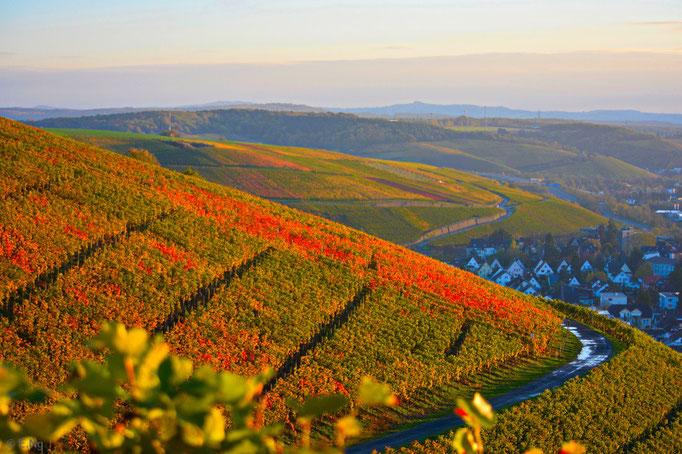 Zauberhafter Herbst in den Weinbergen