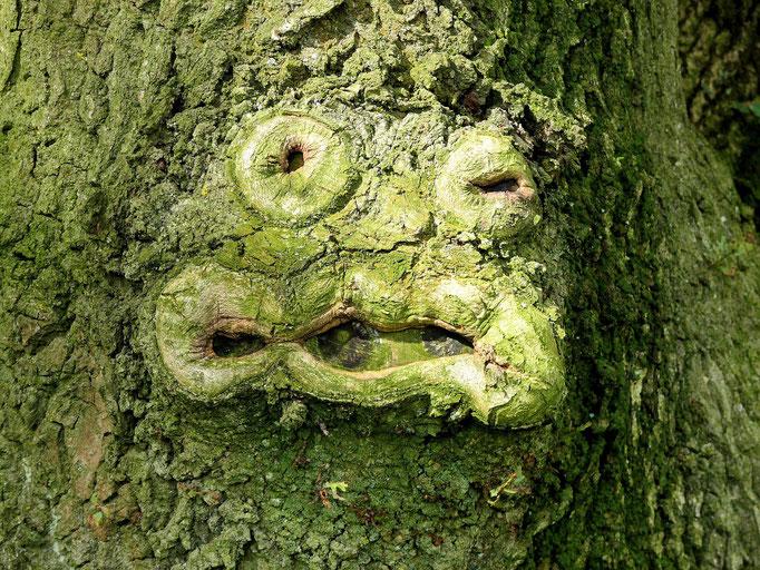 Lustiger Baumfreund