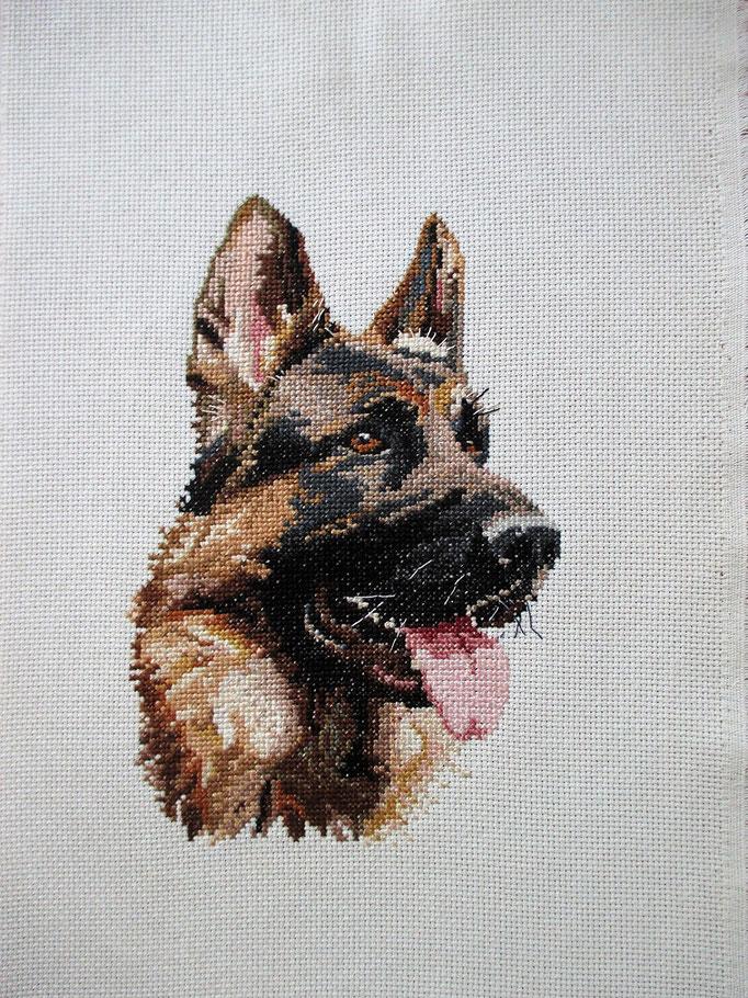Schäferhund, Kreuzstich
