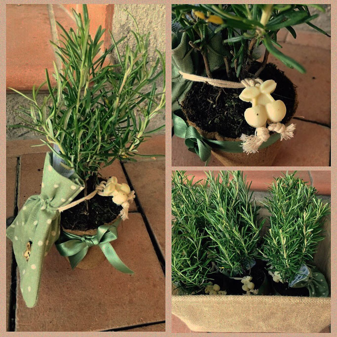 Bomboniera con pianta di rosmarino e sapone al rosmarino