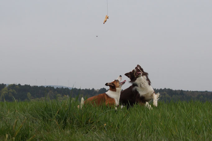 Hundesitter Merzig