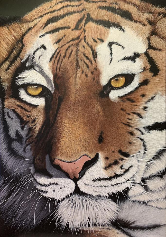TIGER FACE, Acryl auf Leinwand, Acryl auf Leinwand, acrylic on canvas, 100/70 cm, CHF 4'900.--,  Prints erhältlich, prints available