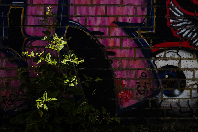 Graffiti plant  |  Doel  |  2016
