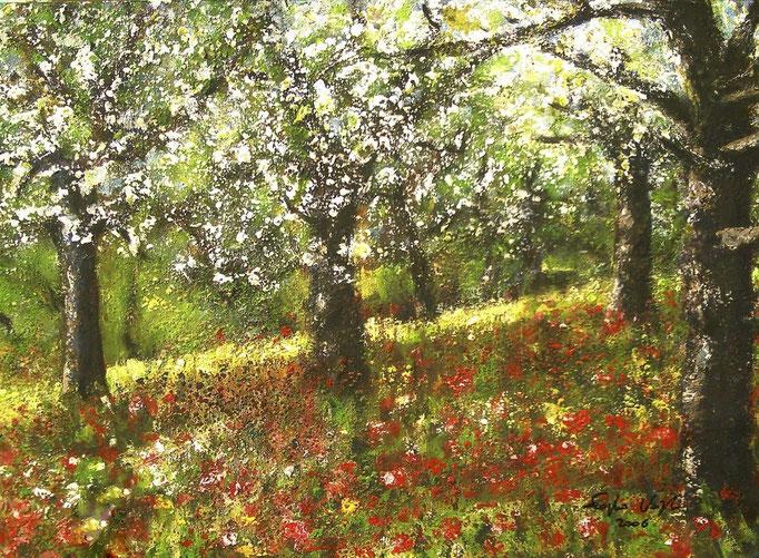 Pommiers en fleurs - 50x70 - 2004