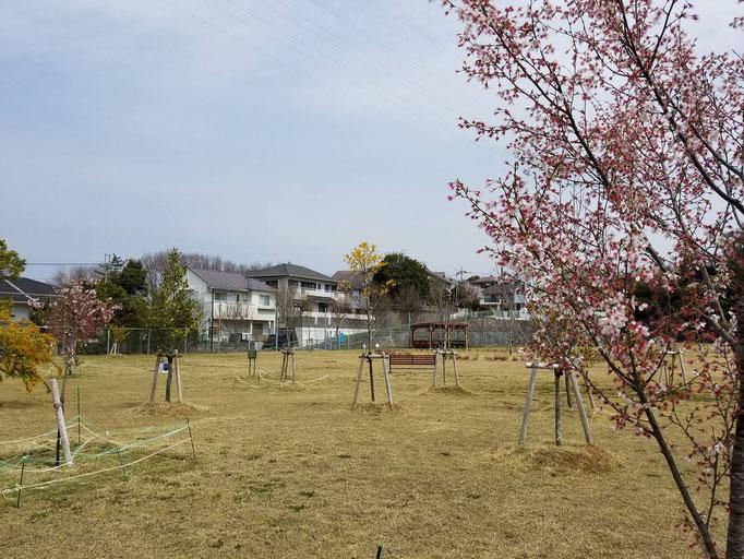 惣山暫定少年グラウンド横緑地