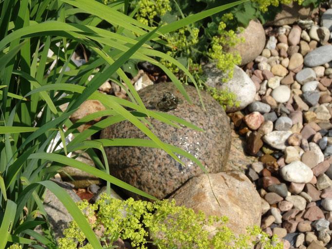 Quellstein für den lebendigen Garten
