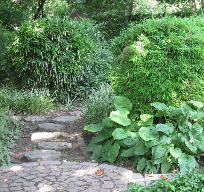 harmonische Gartengestaltung im Schattengarten