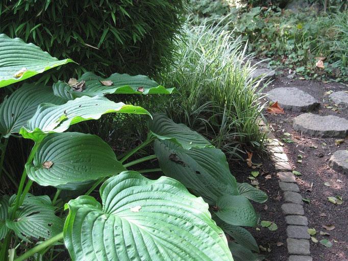 üppiges Grün im Schattengarten