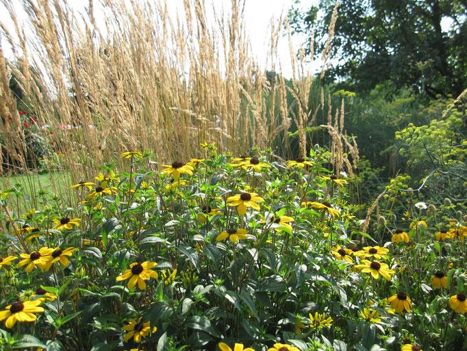 Gartengestaltung schön natürlich, mit Sonnenhut und Gräsern