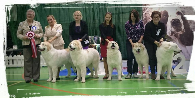 Best in Show Breeder 1  kennel Echo de'Chien