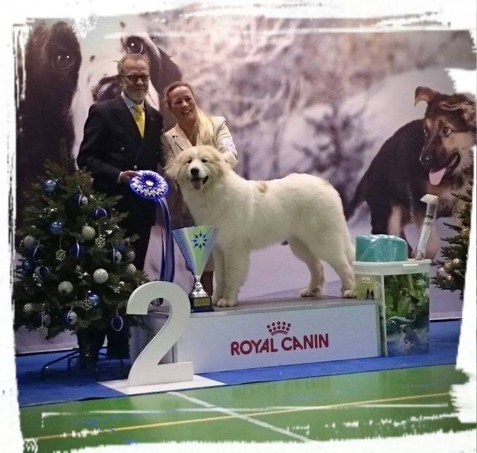 Echo de'Chien Estella - Suprime Best in Show 2nd. Handler Susanna Virtanen
