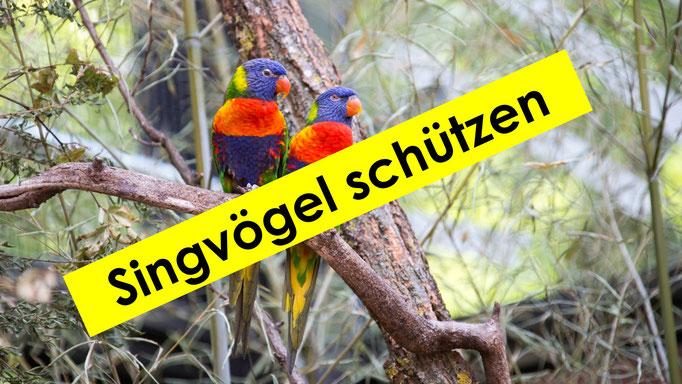 Vogelvoliere Zürich