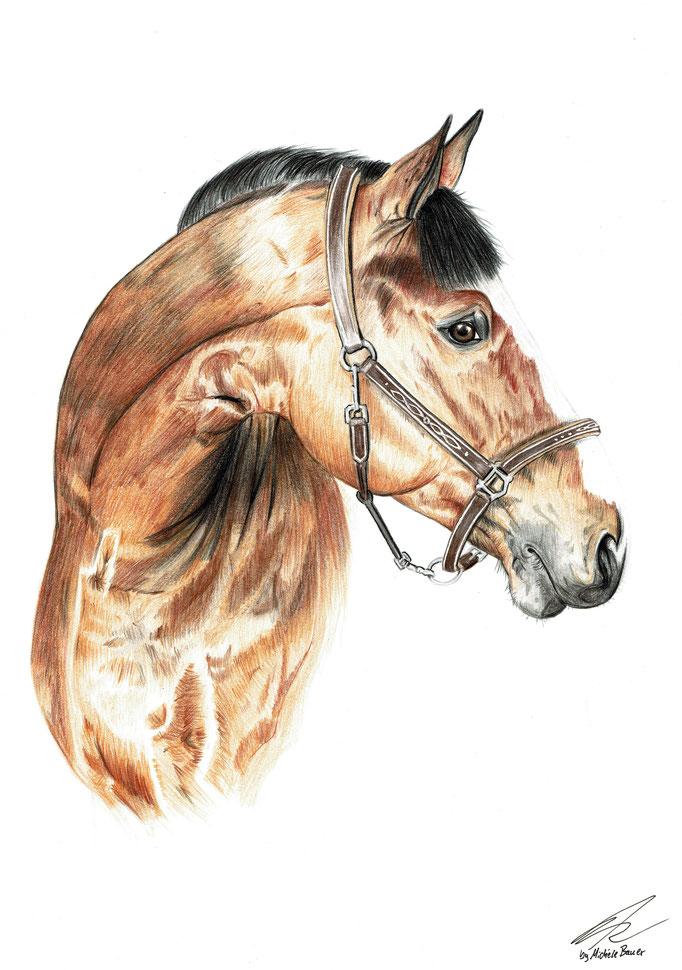 Pferd-A4-2018
